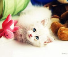 Cats HD Wallpaper