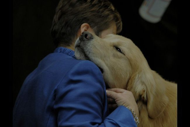 20 Reasons You Absolutely Need A Dog In Your Life Doggie Heaven Dogs Westminster Dog Show Animals