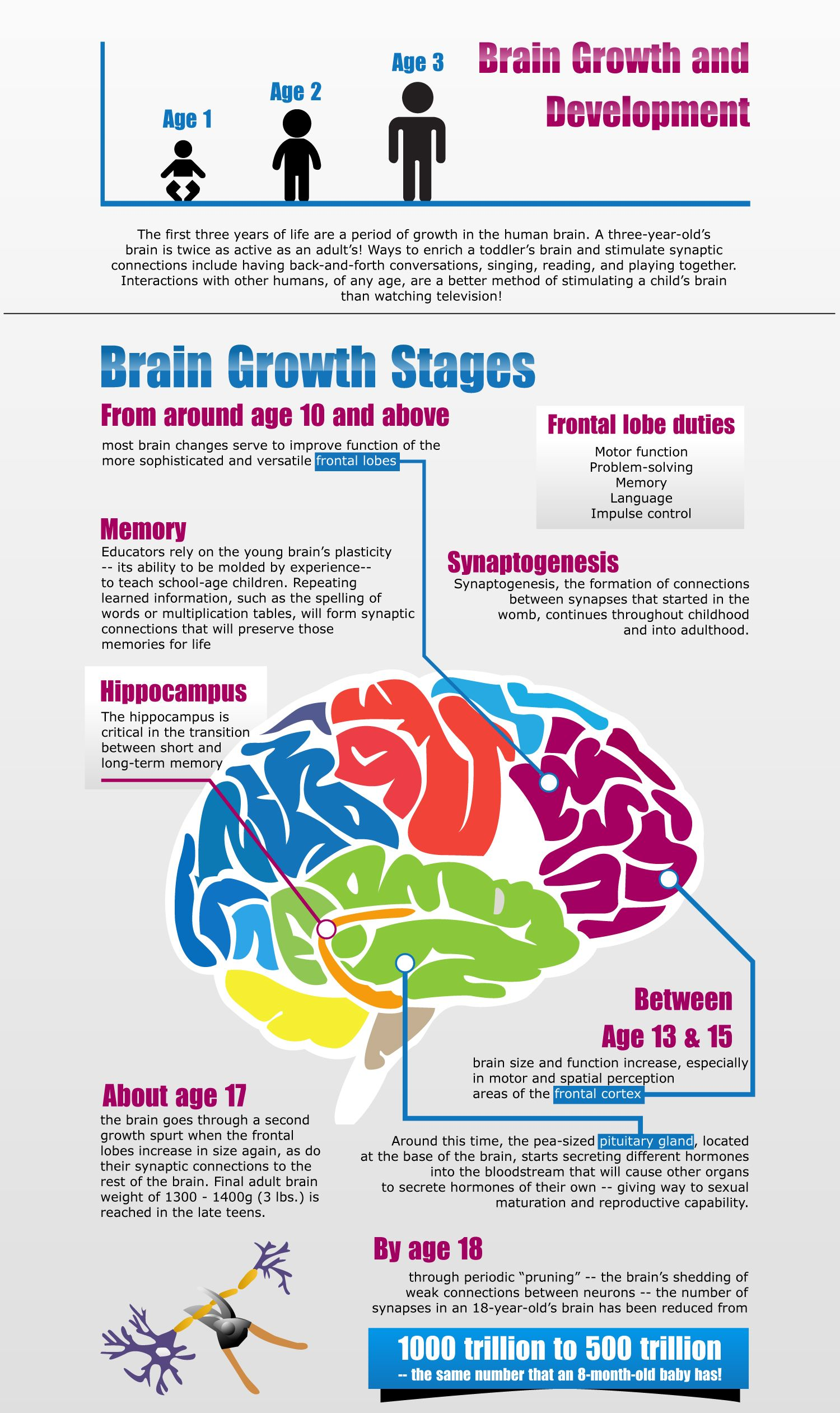 The Human Brain Reaches 95 Of Its Maximum Size By Age 6 Brain Development Continues On Through Brain Development Children Brain Development Whole Brain Child