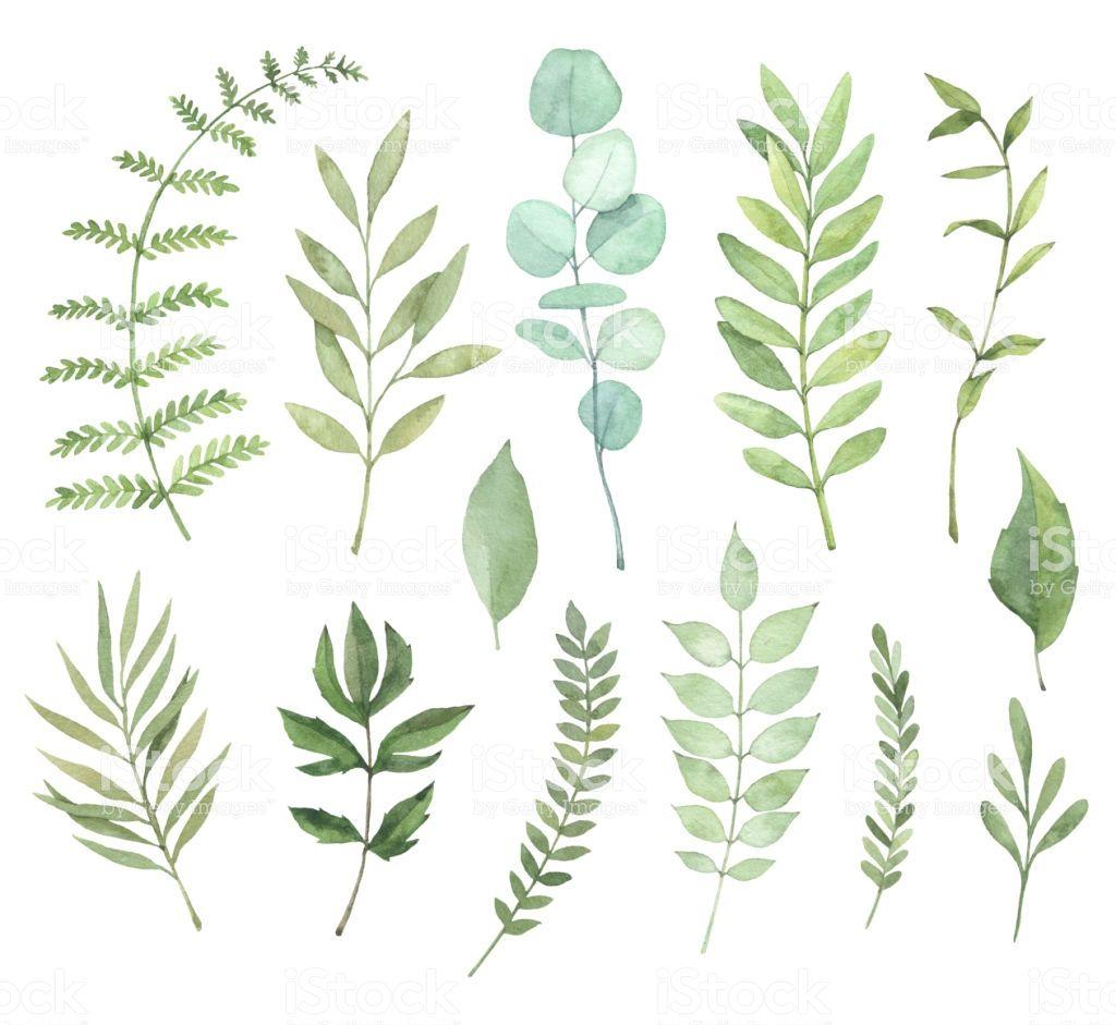Hand Drawn Watercolor Illustrations Botanical Clipart Set Of Green 草 イラスト 手のスケッチ 葉 イラスト