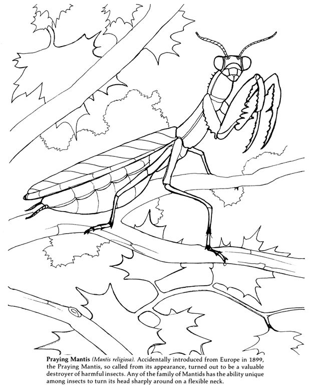 Insects Coloring Book Dover Publications