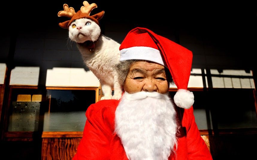 The duo dress up in seasonal outfits - Misao as Father Christmas and Fukumaru as her reindeer