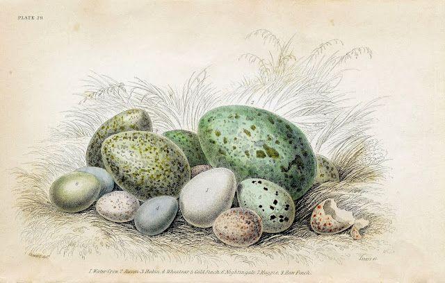 egg prints - Google Search