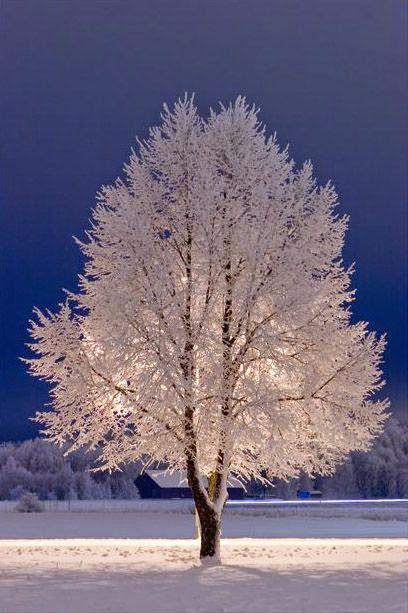 Snow Tree Stockholm Cenario De Inverno Cenas De Inverno E