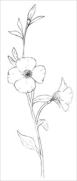Easy Flowers To Draw Wildflower Drawing Flower Drawing Flower
