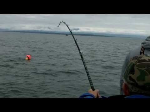 196 cm , 100,4 kg / 222 lbs halibut on the float from Nappstraumen! - YouTube