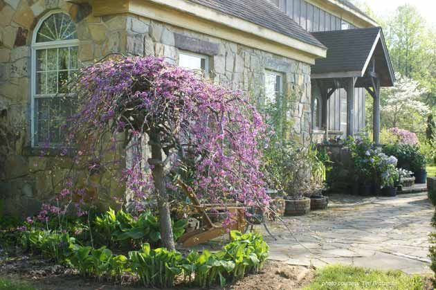 Louisa weeping crabapple tree july 12 14 fri 5 p m for Flowering dwarf trees for landscaping