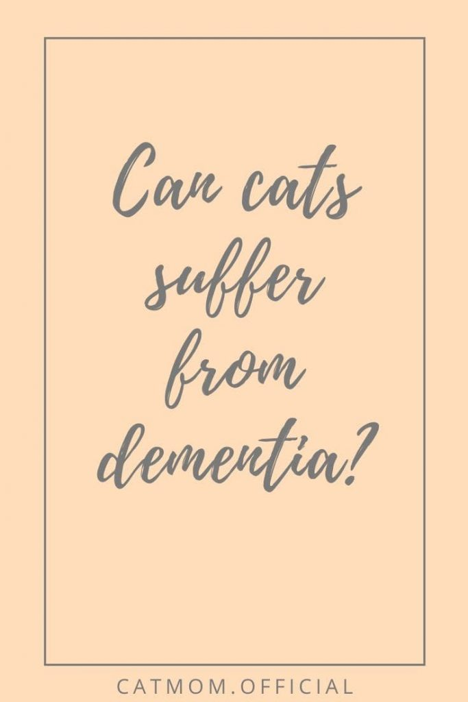 Can cats suffer from dementia? (met afbeeldingen