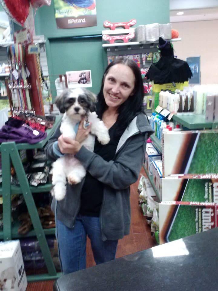PeekAChon Went Home 9613 — at Petland Novi. Pet dogs
