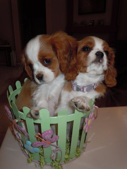 One day, I will have one of these puppies pups..... can't