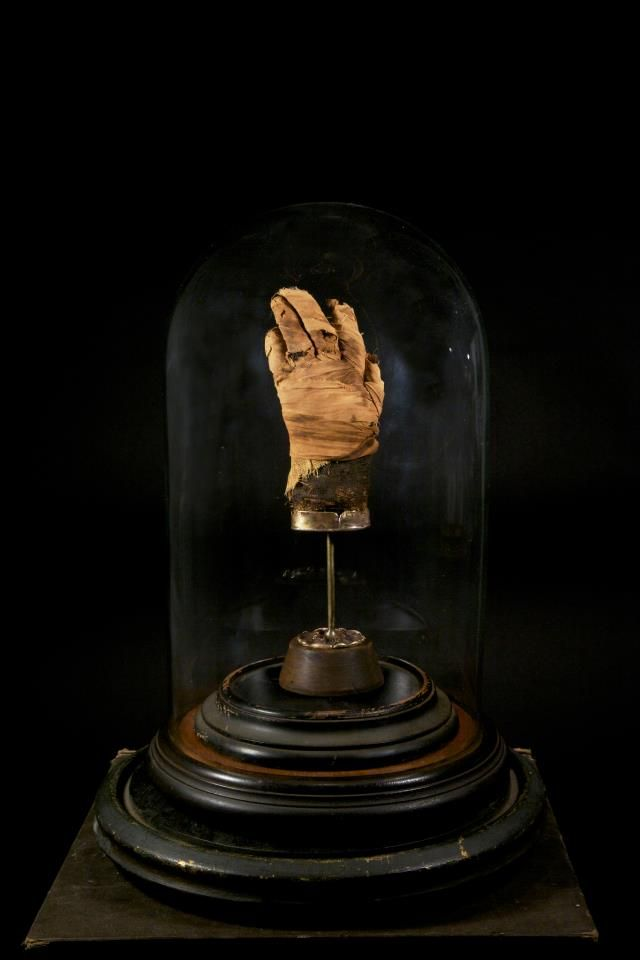 mummy hand from the collection of Ryan Matthew Cohn