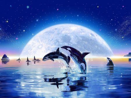 Whales and dolphins fantasy wallpaper id 1662599 desktop nexus whales and dolphins fantasy wallpaper id 1662599 desktop nexus abstract altavistaventures Gallery