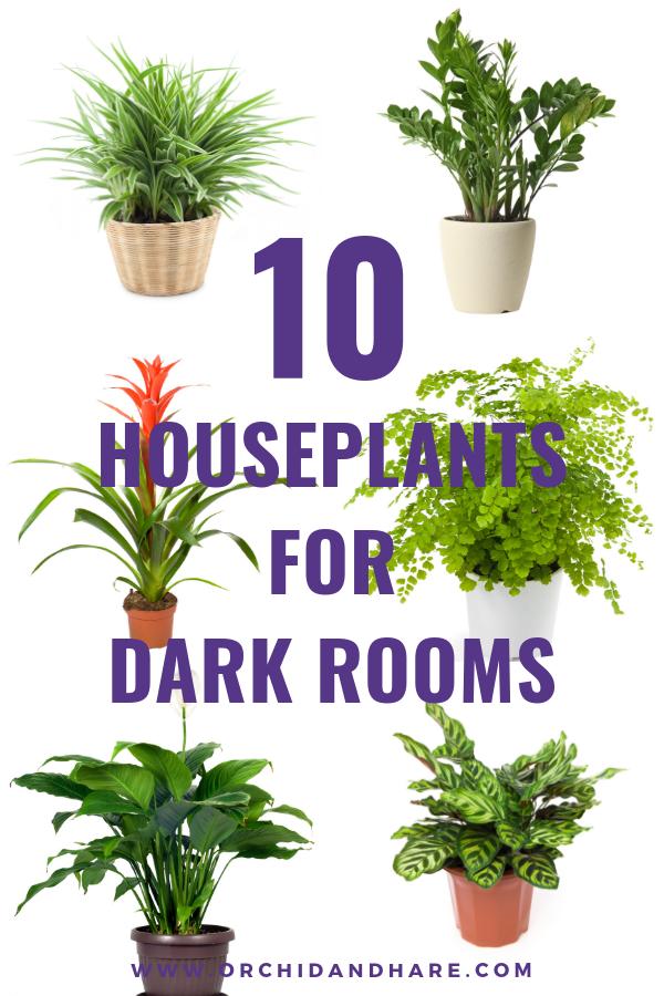 10 Low Light House Plants Low Light House Plants Easy House