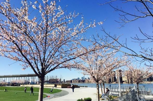 These Nyc Parks Are The Best Spots In The City For A Picnic Picnic Spot Nyc Park Long Island City