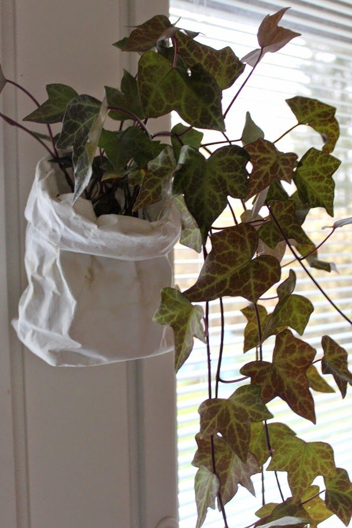 Valoisaa vaaleaa | ivy in paper bag