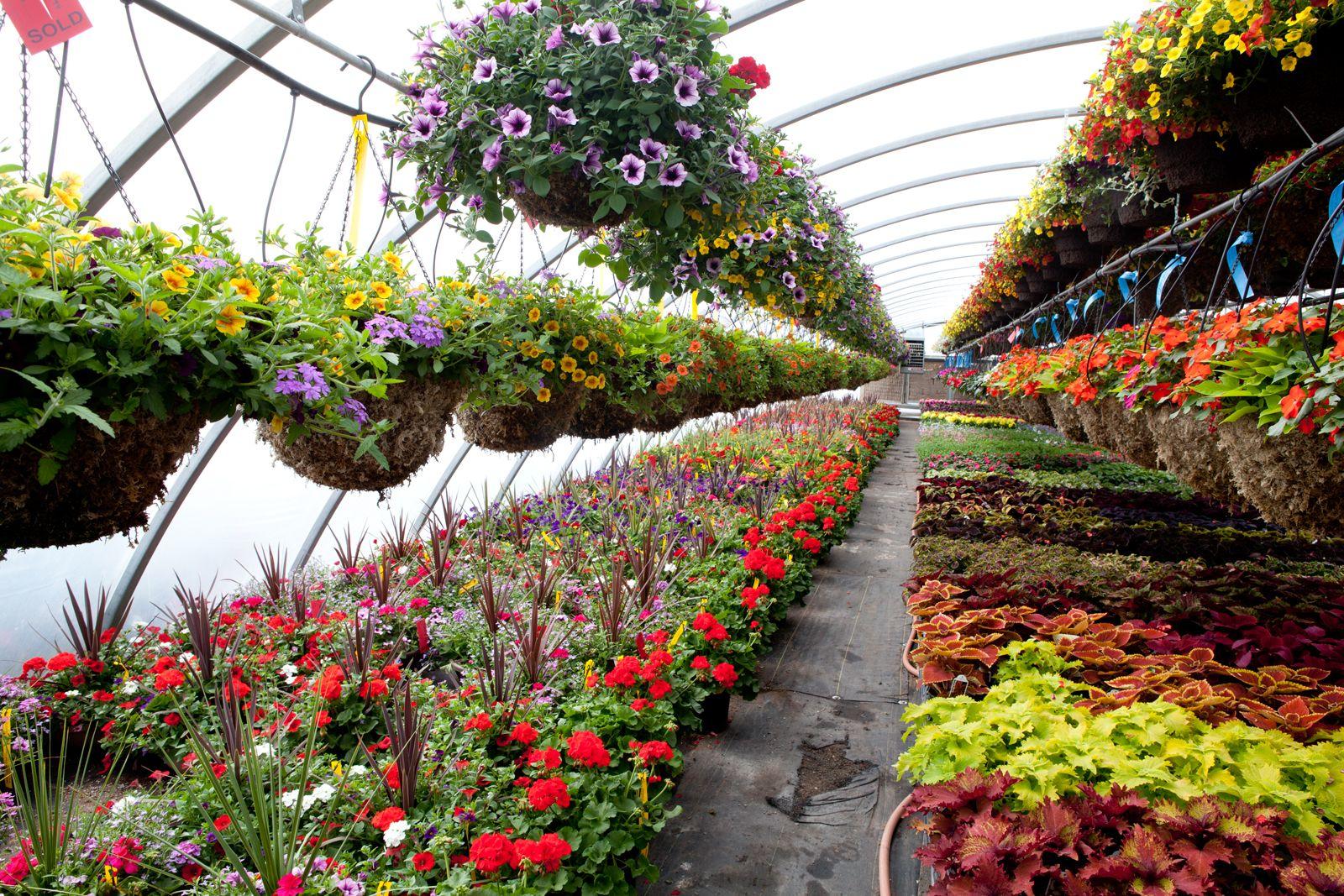 Get Plant Nursery In Ivanhoe East By