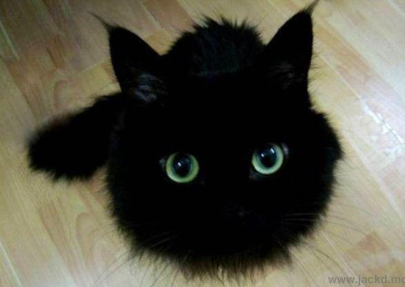 Cat, My Neighbor Totoro, Makkurokurosuke