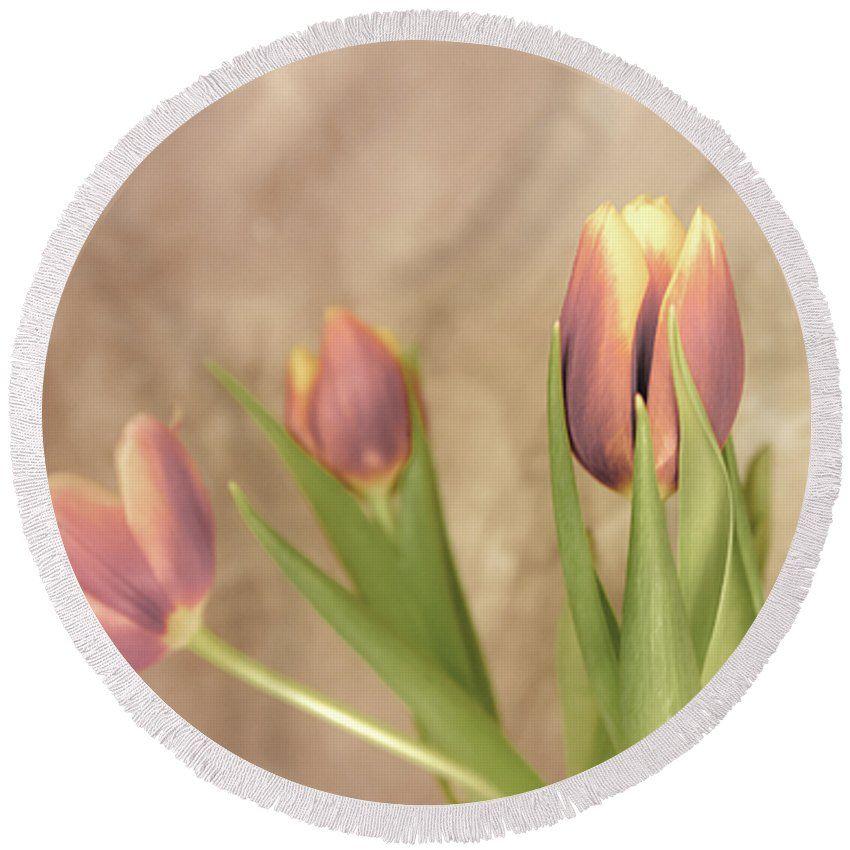 #AnnaMatveeva #Photographers #ForSale #FineArtAmerica #BeachTowels #Towels #Homedecor #Tulipsl #Nature #Flowers #Pink  http://anna-matveeva.pixels.com/