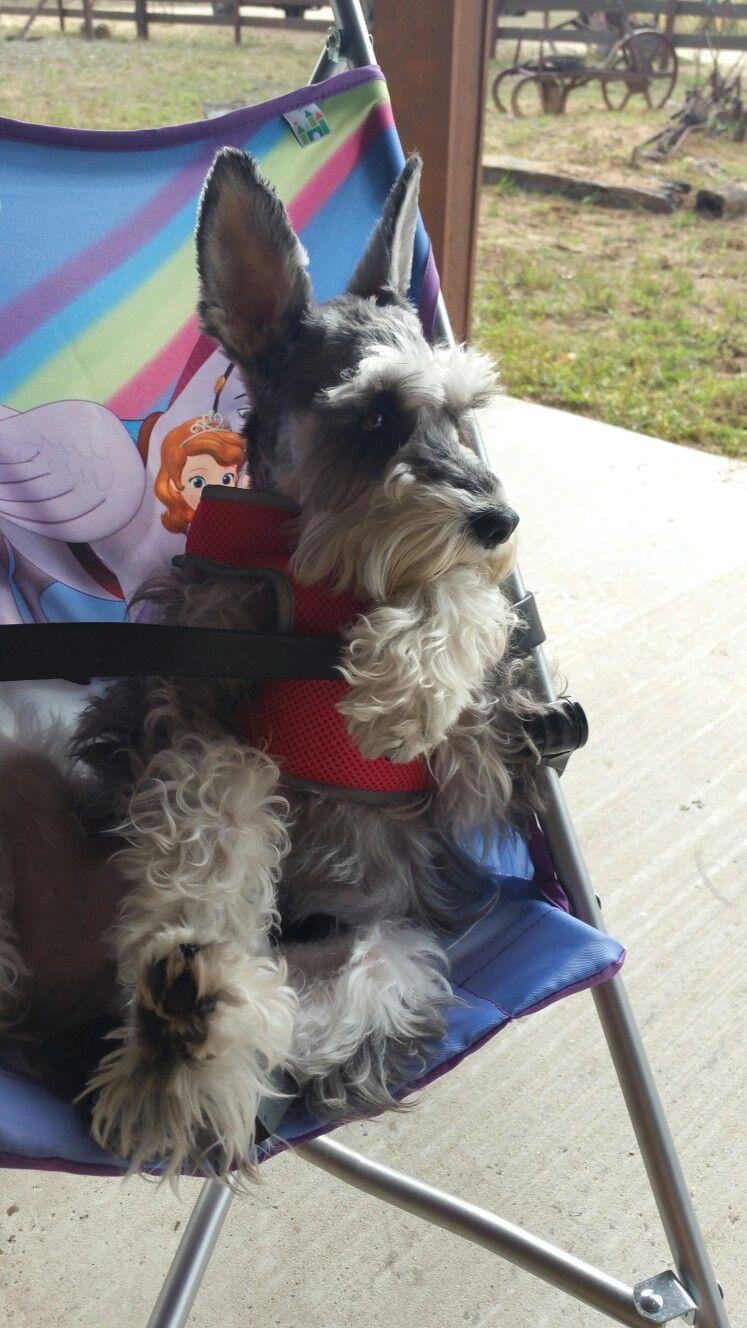 Sophie in her stroller.  She just loves it!