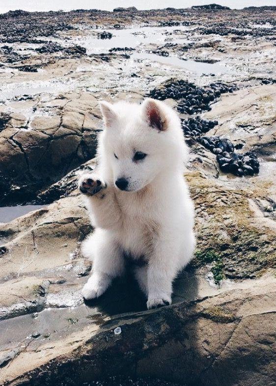 Download Funny Canine Adorable Dog - 3c0ea66c8fbd60ea5193451c671a60c6  Graphic_469497  .jpg