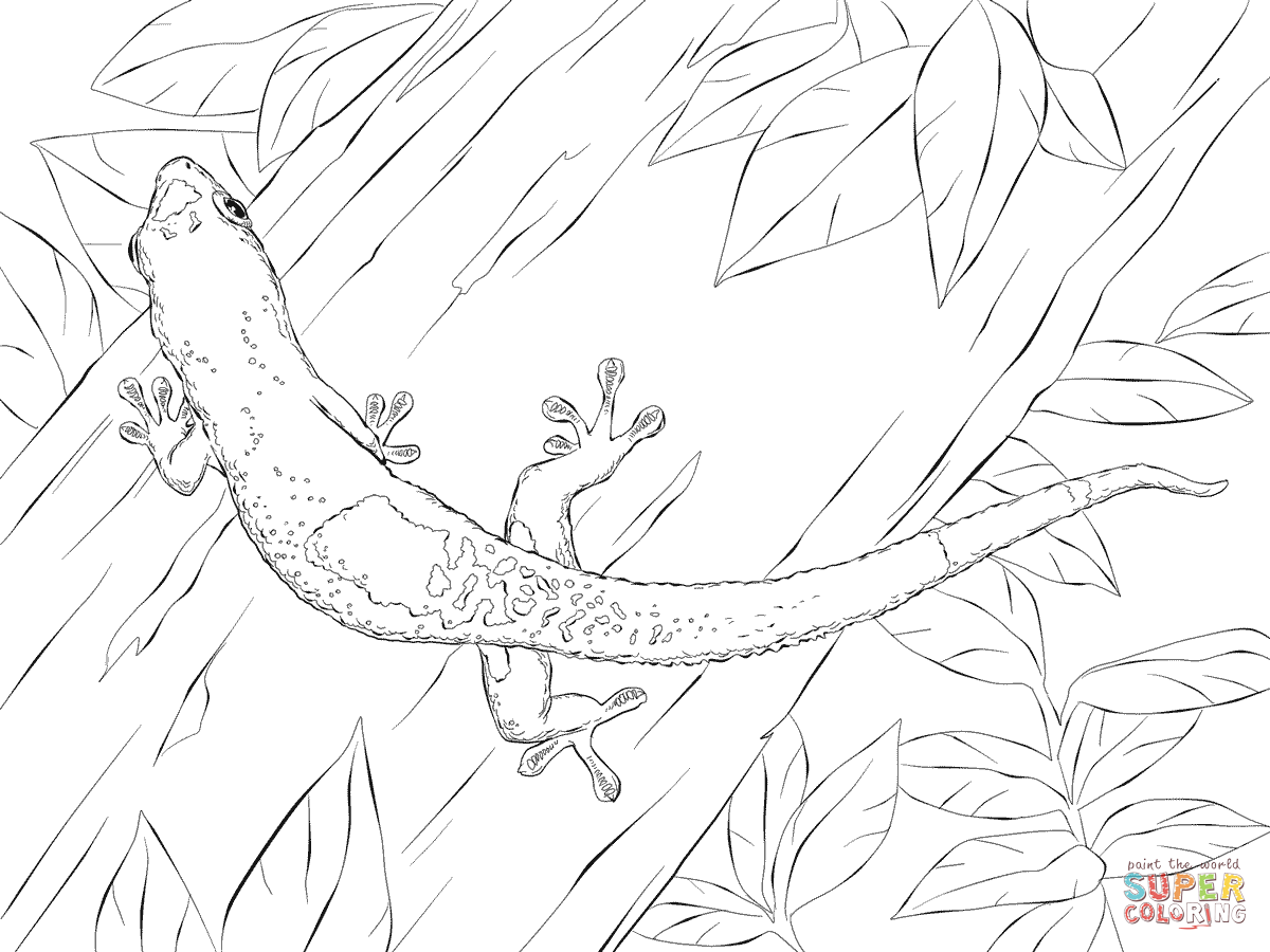 Madagascar Day Gecko Coloring Page