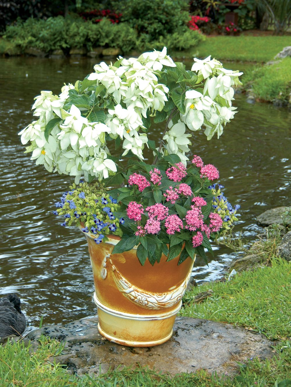 Musseanda frondosa forms the centerpiece and is surrounded by pink ...