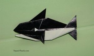 Origami Killer Whale - 'Origami Under the Sea' by John Montroll and Robert Lang. This whale said to be intermediate in difficulty
