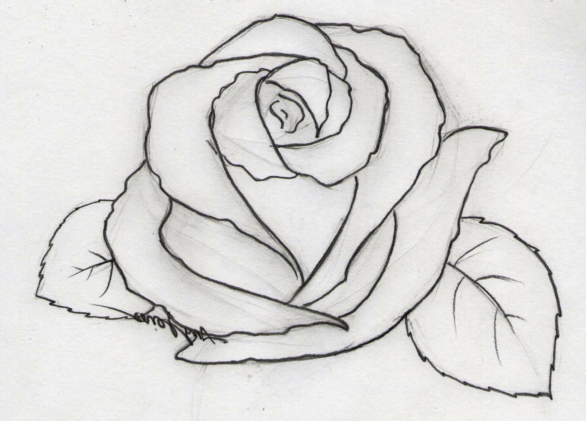 Image Result For Easy Pencil Drawings For Beginners Flower Drawing Pencil Drawings Easy Flower Sketches