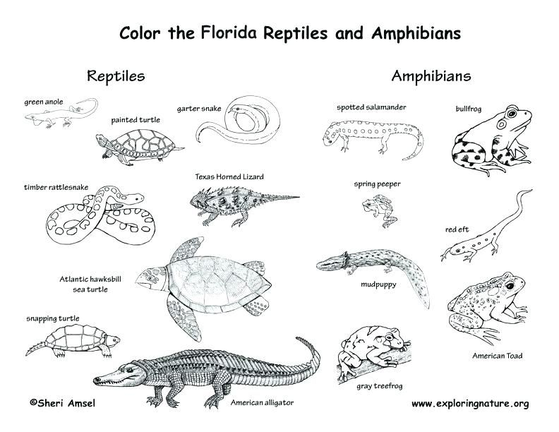 Animal Habitat Coloring Pages Reptile Coloring Page Coloring Pages