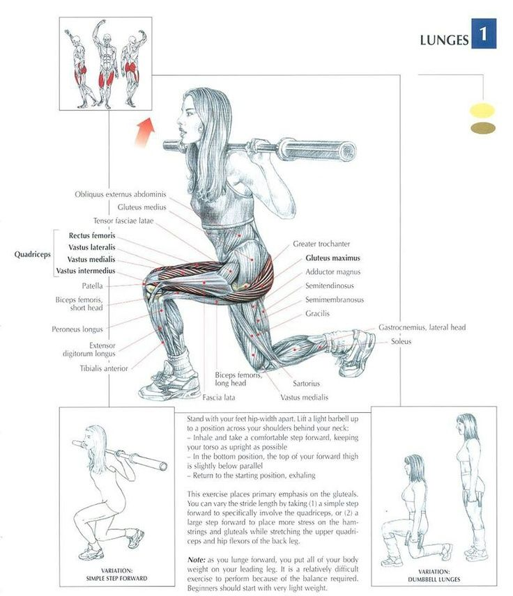 The LUNGE Exercise Muscle Anatomy | Panel, Ejercicios y ...