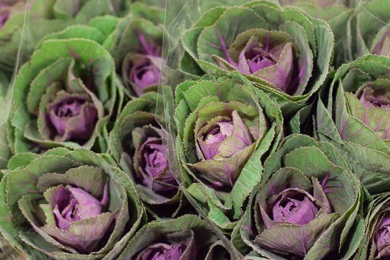 Image result for covent garden brassica