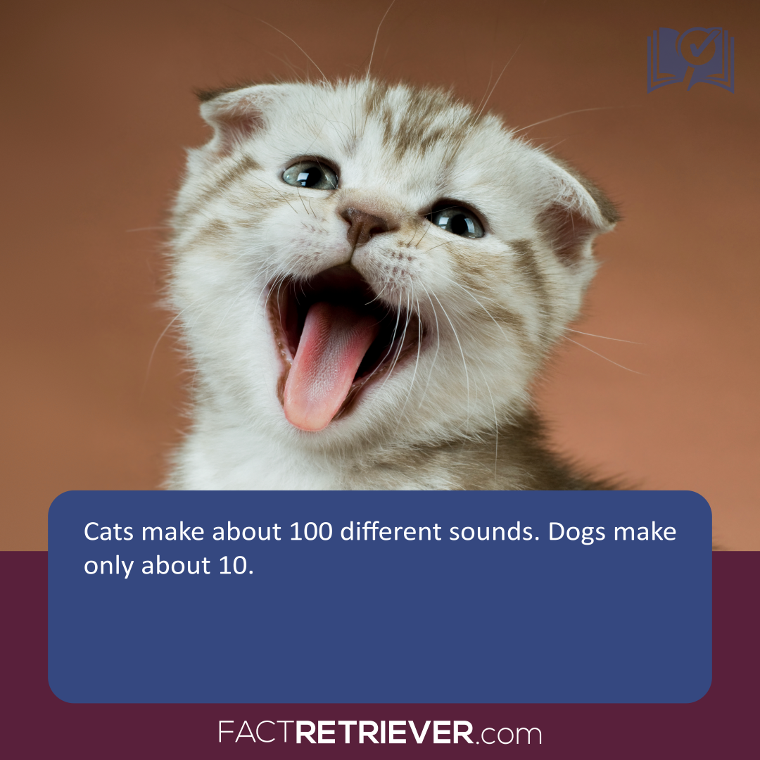 103 Interesting Facts about Cats Cat facts, Cats