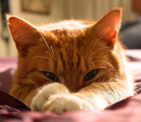 Orange Tabby Cat Name List Male And Female In 2020 Tabby Cat Names Orange Cat Tabby Cat