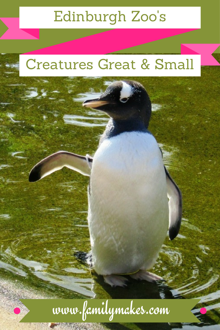 Click Through For Our Review Of Edinburgh Zoo Including The Exhibition Of Creepy Crawlies And A Gret Vide Family Days Out Uk Edinburgh Zoo Days Out With Kids