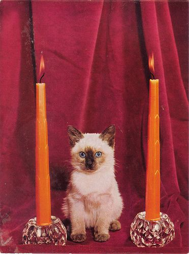 Sinister Kitten Crazy Cats Kitten Vintage Cat