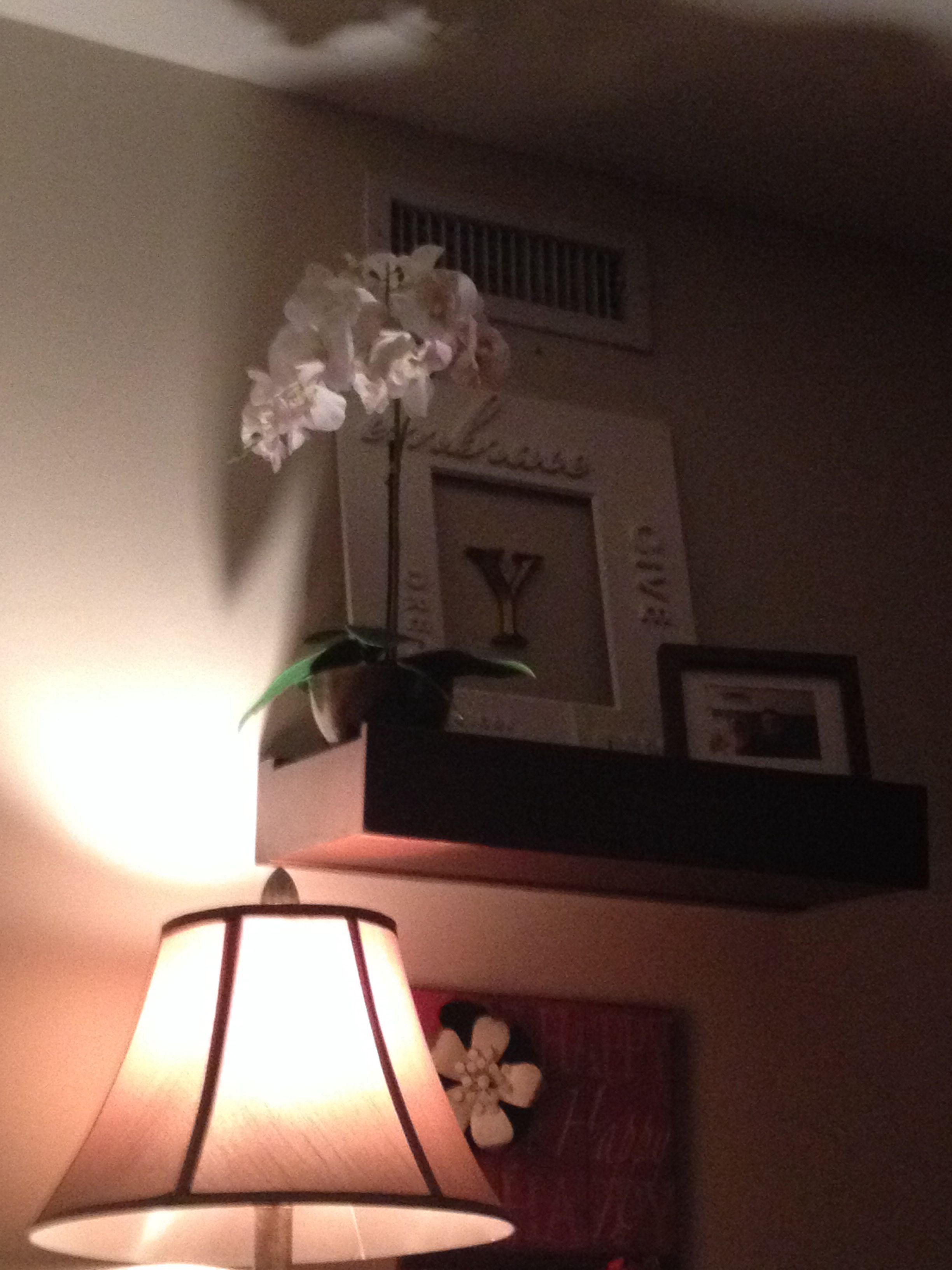 Orchid on my shelf in living room