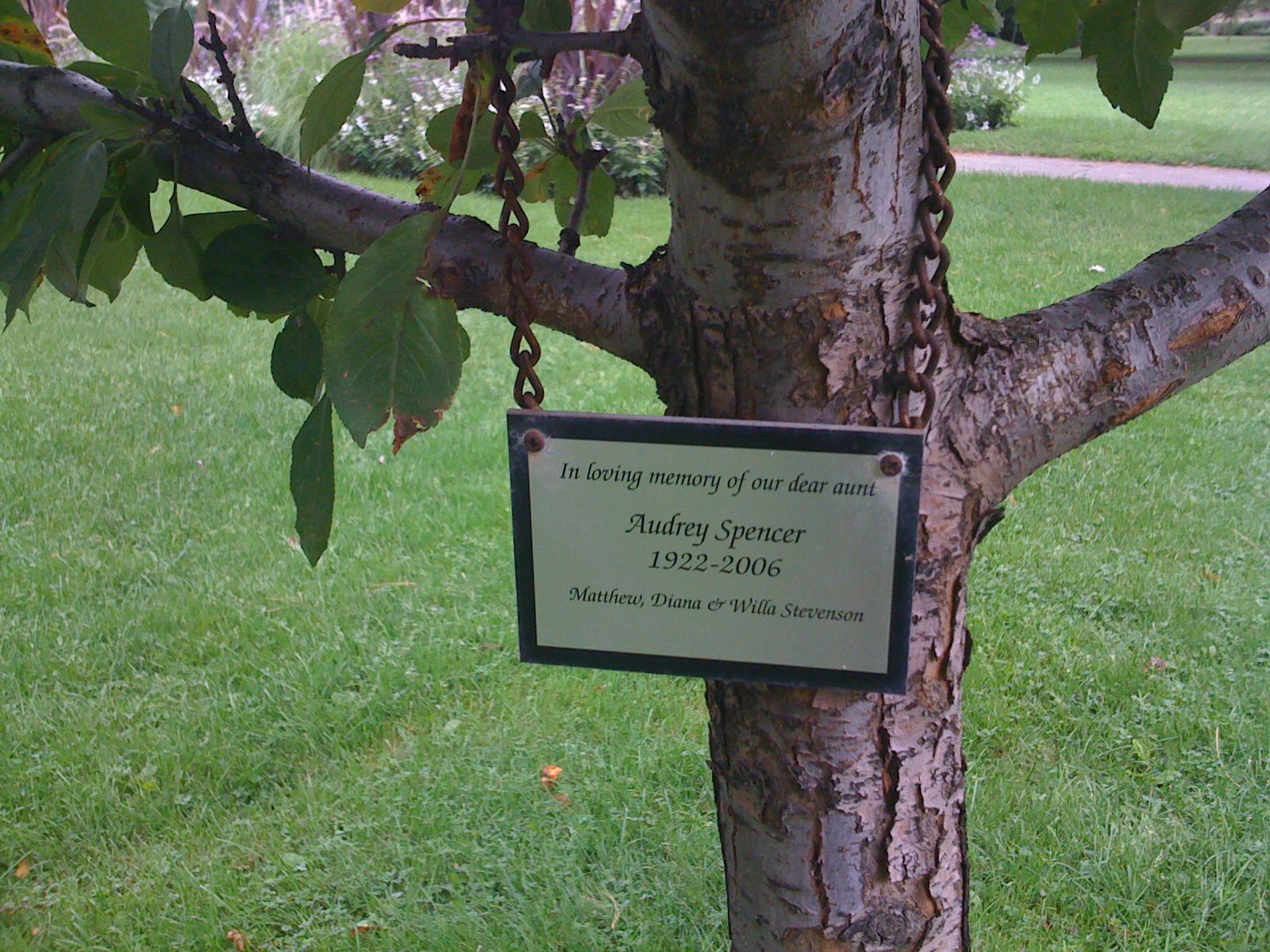 Tree Dedication Plaque Memorial Tree Ideas Memory Tree Memorial Flowers