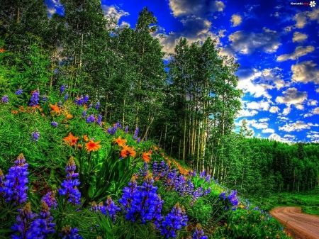 Natural Scene Summer Scenery Amazing Natural Awesome Natural 3d Nature Wallpaper Spring Forest Beautiful Nature