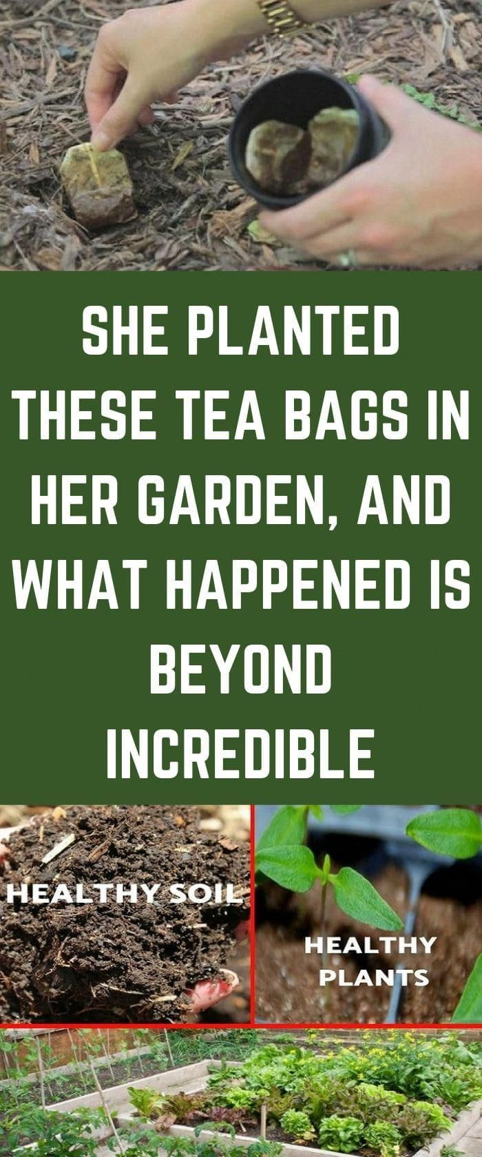 Unbelievable She Planted Tea Bags In Her Garden And See What Happened #health #food…