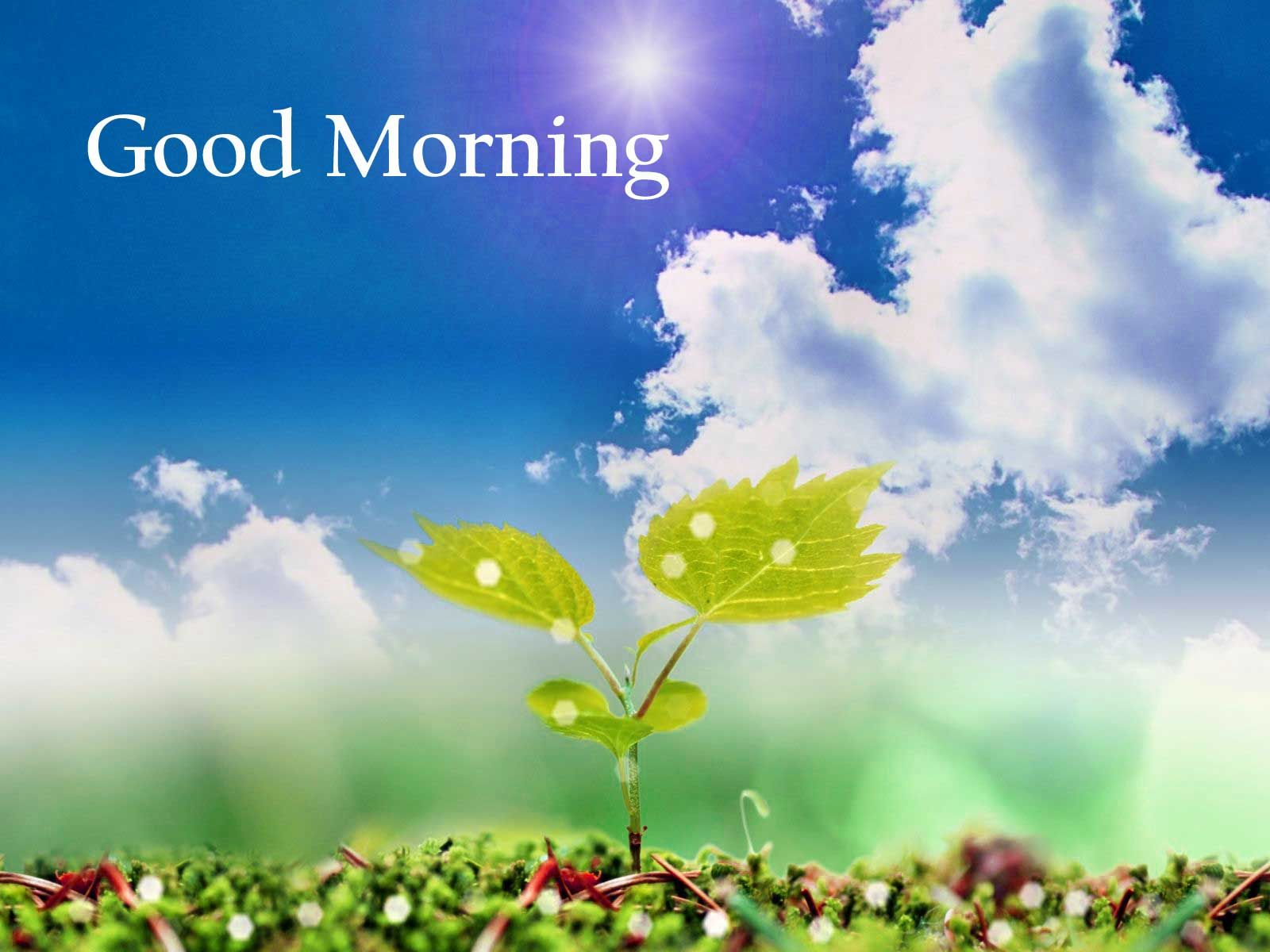 Hd Of Good Morning Nature For Pc Full Flowers Here Computer Free Good Morning Images Good Morning Nature Good Morning Photos