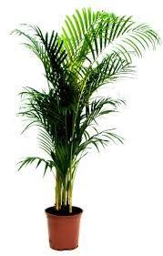 """Résultat de recherche d'images pour """"plantes exterieures vertes"""""""