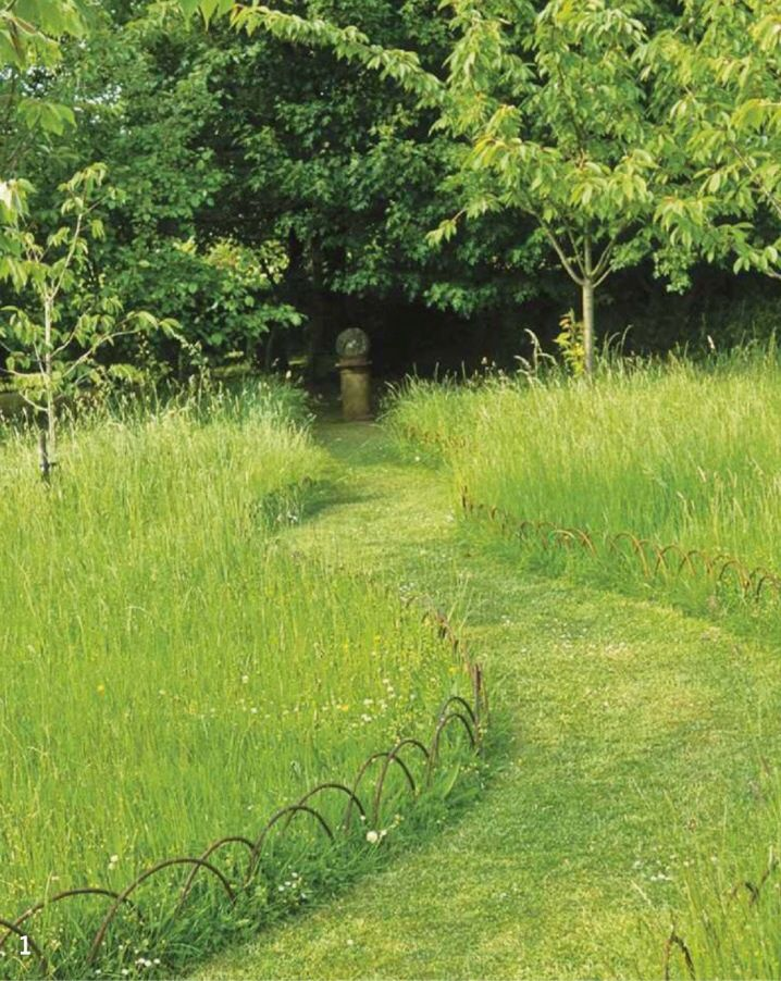 Beautiful photos and looking gorgeous on pinterest for Wild grass landscaping