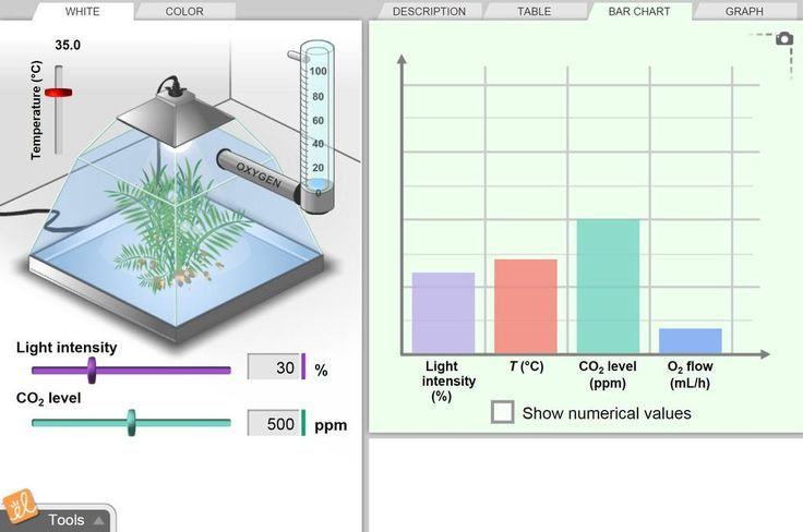 Gizmo Rate Of Photosynthesis Using Factors Such As Light Intensity