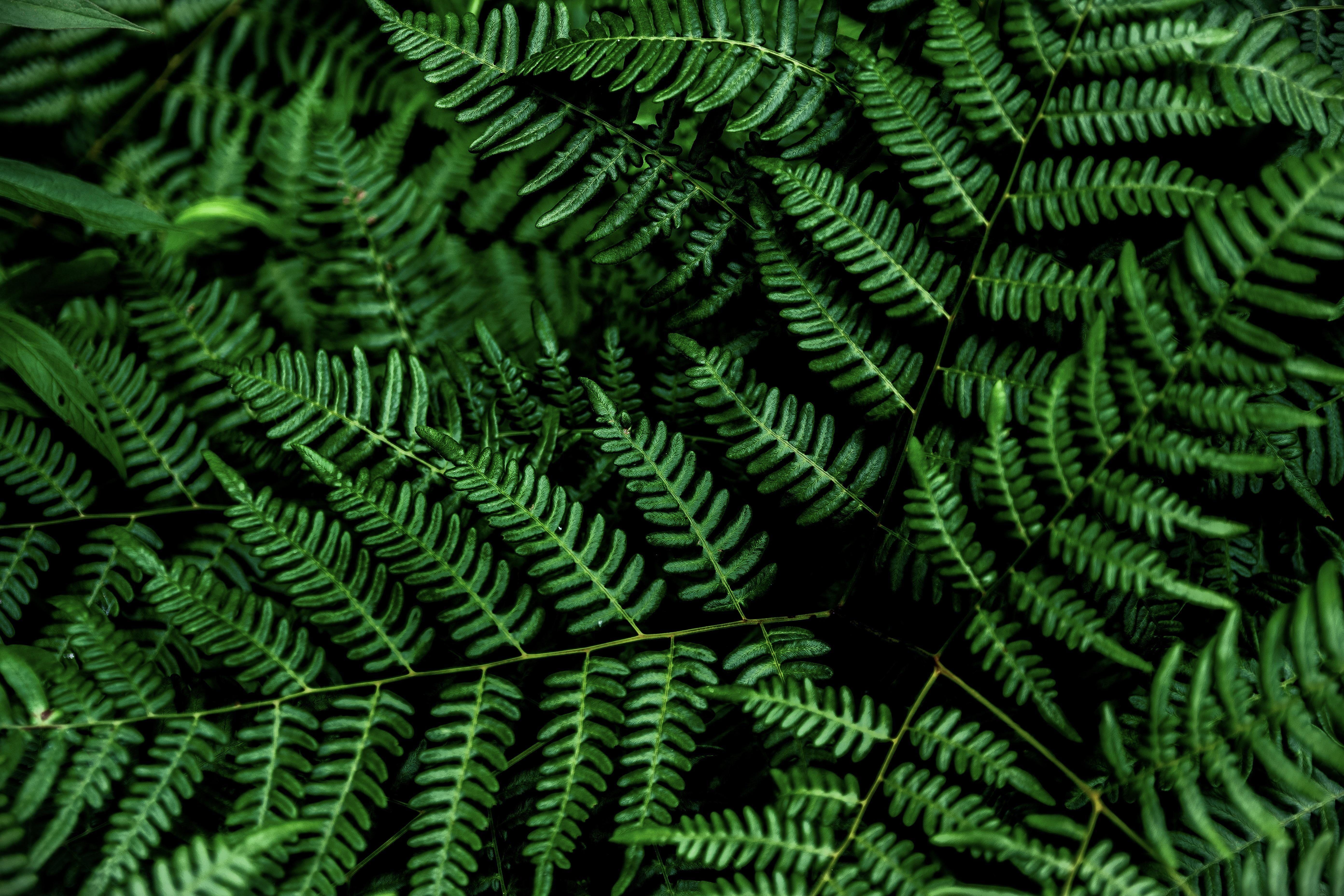 4K oled plants fern green black 5K wallpaper