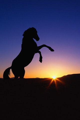 silhouette at sunset #horse #mustang #sunset | Sunrise ...