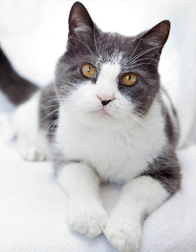 Adopt Ace On Cute Animals Cats Kittens