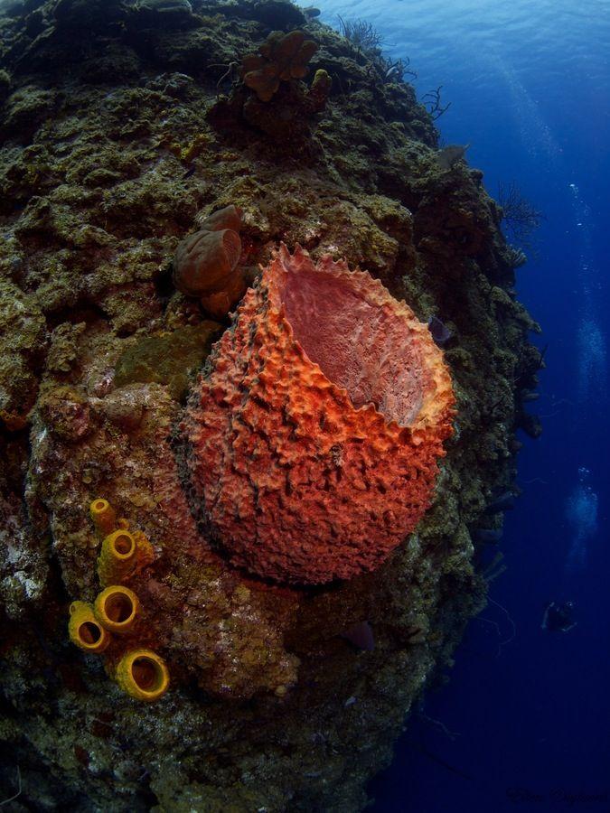 #Barrel #Sponge