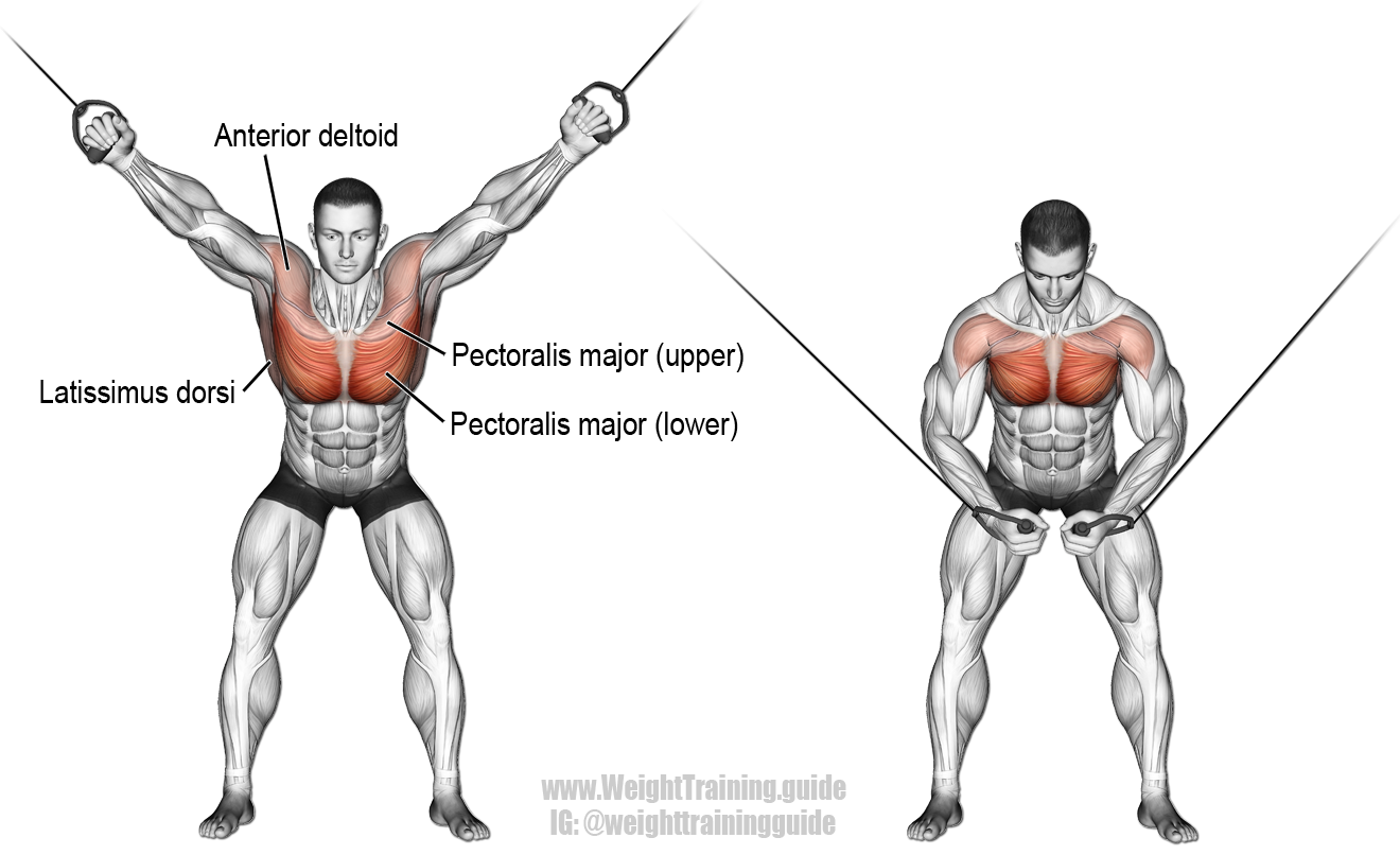 high cable crossover  an isolation push exercise  muscles