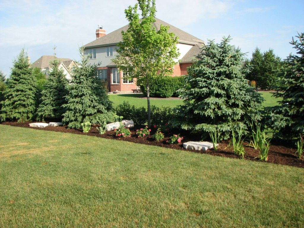 tree shrub privacy border - google