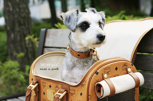 STYLd puppy  - MCM pet carrier